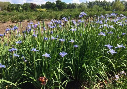 Ką Vilniuj galima nuveikti savaitės vidury - Botanikos sodas