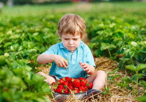 Prie vaisių ir uogų pratinkime mažylius pamažu