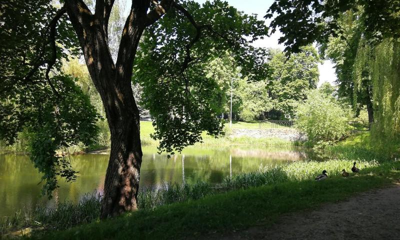 Vasaros gidas: Žvėryno tvenkiniai Vilniuje