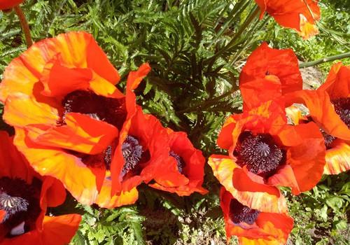Vasaros savaitgalis: apie blynus ir kaimynus