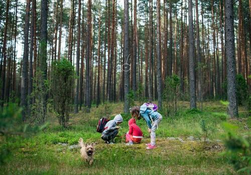 Ką veikti su vaikais per JONINES: 5 žaidimų idėjos
