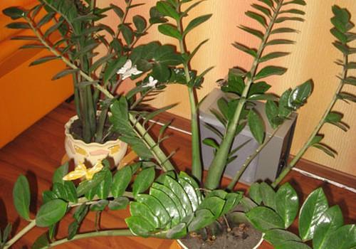 Savo augalus stengiuosi palepinti