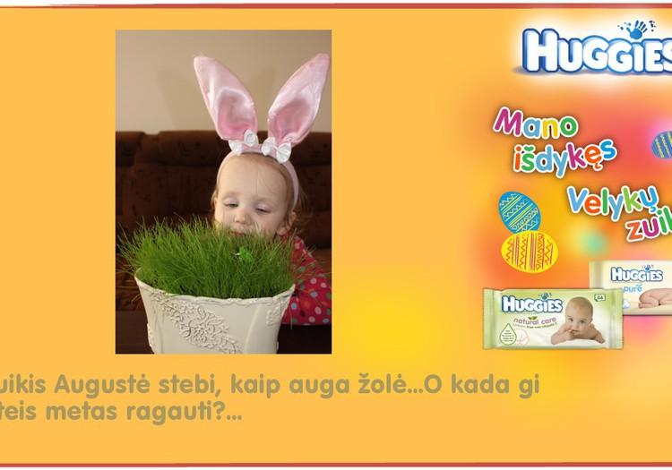 Zuikis Augustė stebi, kaip auga žolė...