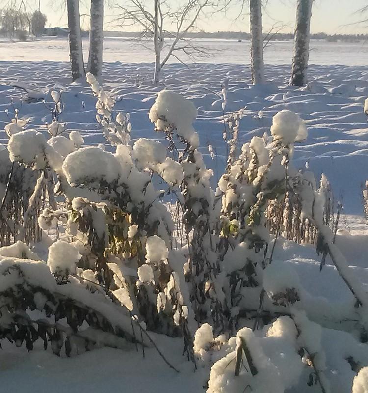 Žiemos blogas::) :)
