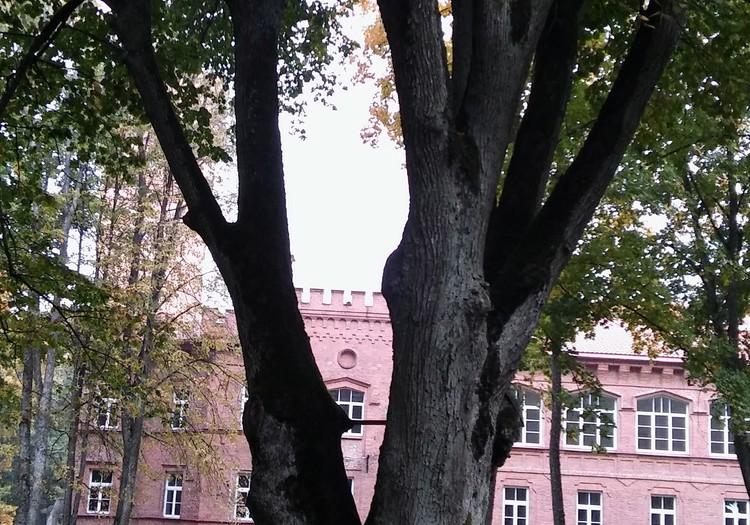 TOKIA MŪSŲ KASDIENYBĖ. Metų medžio rinkimai