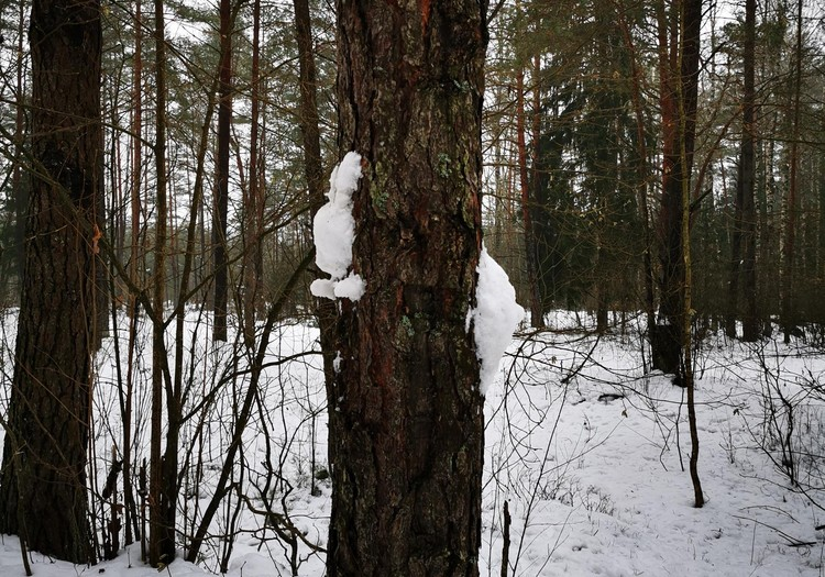 Sniego fantazijos