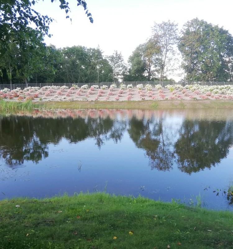 Hortenzijų parkas