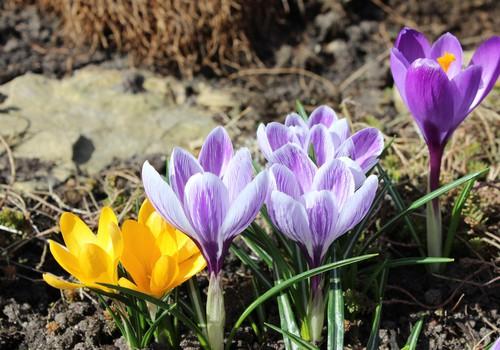 Žaliaraštis: pavasariški džiaugsmai ir darbai lauke švilpaujant varnėnams