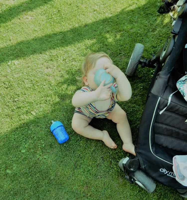 Mažoji vasarotoja rugpjūčio sode