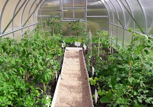Vaikai išbando daržininkystę: darželiuose skinamas pirmasis derlius