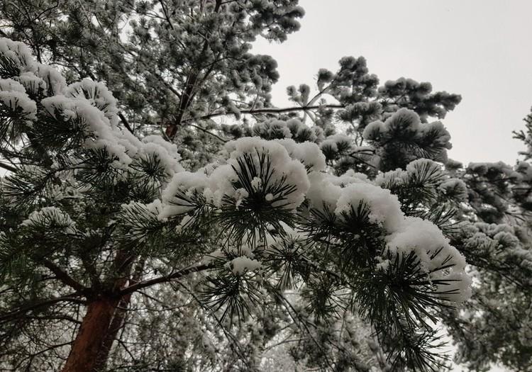 Pirmojo sniego patalai