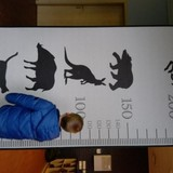 Pasimatavome ir ūgį- kengūros ir šernas pas mus :)