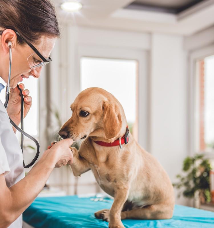 Ašaras kasdien matanti veterinarė: skaudžią pamoką žmonės išmoksta per vėlai