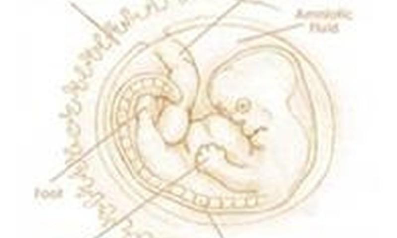 Aštuntoji savaitė: embrionas pradeda judėti