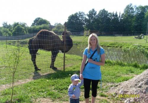 Mini ZOO parke - gausybė gyvūnėlių ir įvairios pramogos mažiesiems