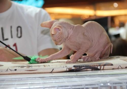 Įspūdžiai iš Tarptautinės kačių parodos