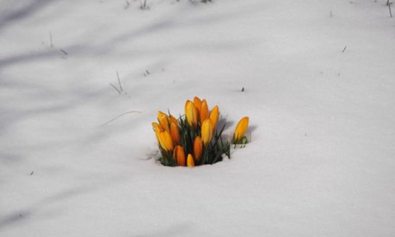 Gamta pavasarį tartum vaikas,  kasdien auga ir keičiasi...