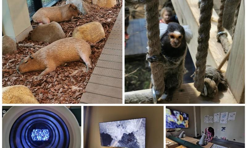 Vasaros gidas: Zoopark Vilniuje - sužavėjo gyventojų gausa ir įvairovė