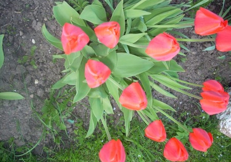 Spalvingas pavasaris Jurgitos akimis