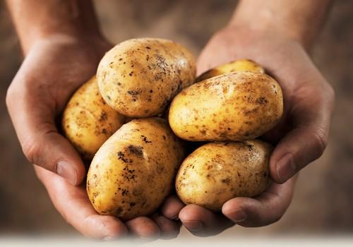 """V.Kurpienė: """"Pirmosios košės ir vėlesnė vaikų mityba: bulvė"""""""
