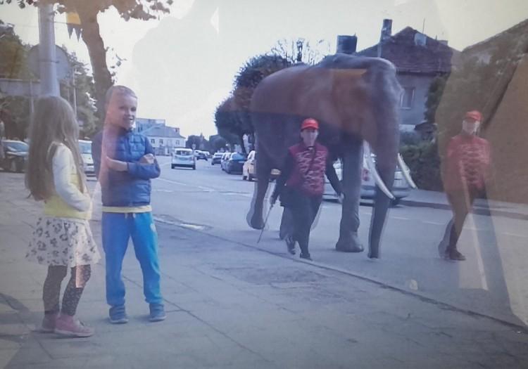 Mama, dramblys po miestą vaikšto :) !!!