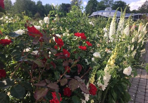 Vasaros gidas: Kauno botanikos sode