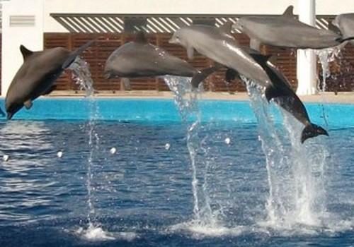 Holla, Espania. II dalis: Didžiausias akvariumas Europoje