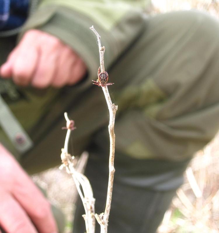 Biologas įspėja: atsiradus naujai erkių rūšiai Lietuvoje, pasikeitė ir jų aktyvumo pikai – saugotis reikia visus metus