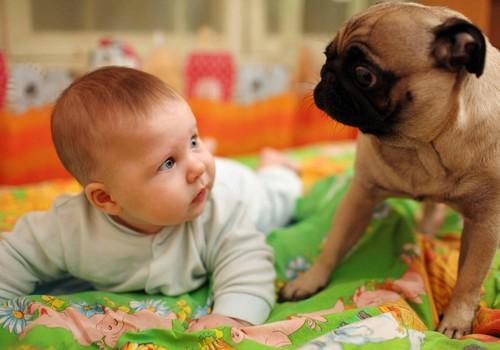 Mama Asta: Kada šuniui leidote apuostyti kūdikį?