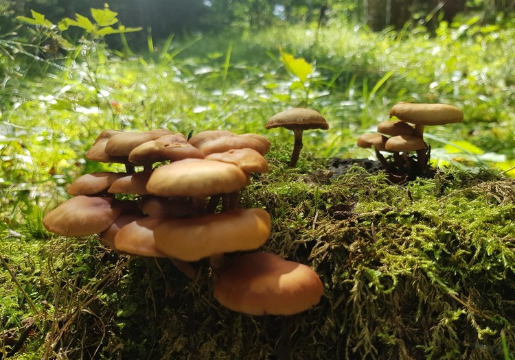 Vasaros gidas: Labanoro giria