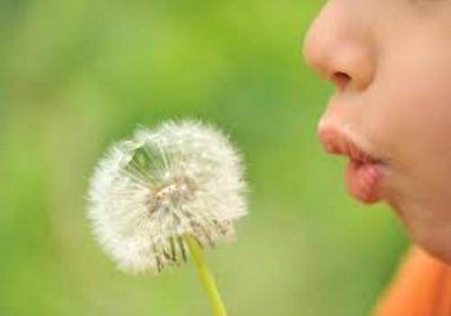 Alergijos – XXI a. epidemija: kaip homeopatija gali padėti?