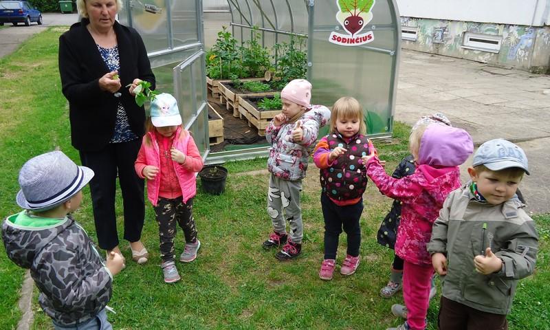 Mokys vaikus auginti daržoves: dvidešimčiai šalies darželių – po šiltnamį