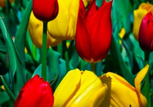 Su 30-uoju mūsų LAISVĖS pavasariu!