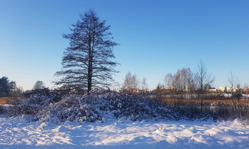 Žiemos kerai