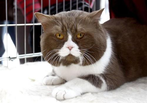 Savaitgalio renginiai: nuo cirko iki kačių parodos