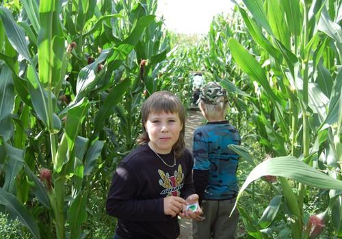 Ar buvote kukurūzų labirinte?