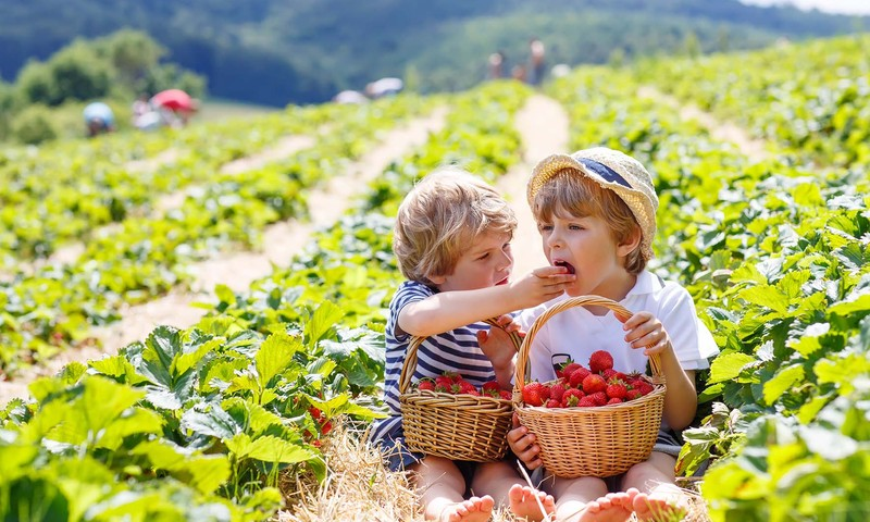 """Nemalonūs vasaros """"siurprizai"""": kodėl pavojinga valgyti neplautus vaisius ir daržoves?"""