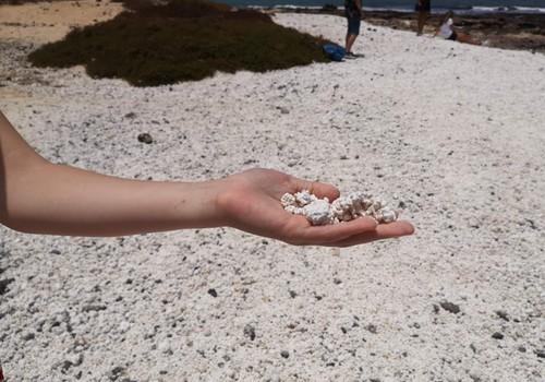 VASAROS GIDAS. Fuerteventūros koralai, burundukai, ožkos ir t.t.