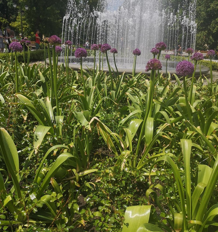 Vasaros gidas: Neatrasti Bernardinų sodo lobiai