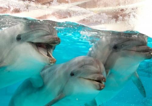 Svečiuose pas delfinus