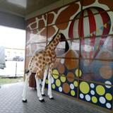 Čia žirafa