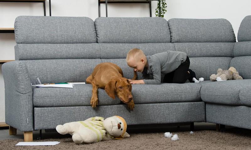 Kaip išsaugoti baldus, jei namuose yra augintinių?
