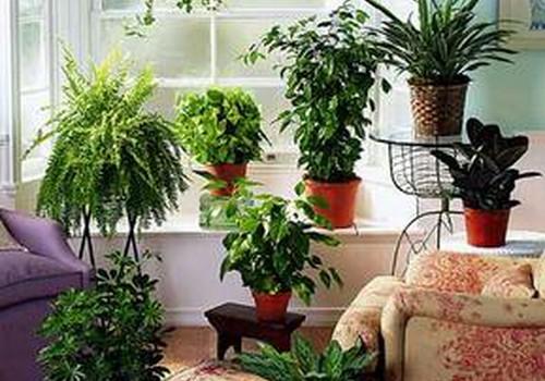 Ar esate kambarinių gėlių mylėtojos? Kokios gėlės puošia jūsų namus?