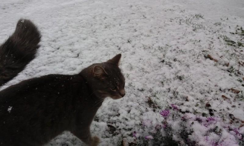 RUDUO: pirmas sniegas :)