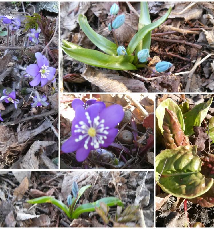 Dar daugiau pavasario.. :)