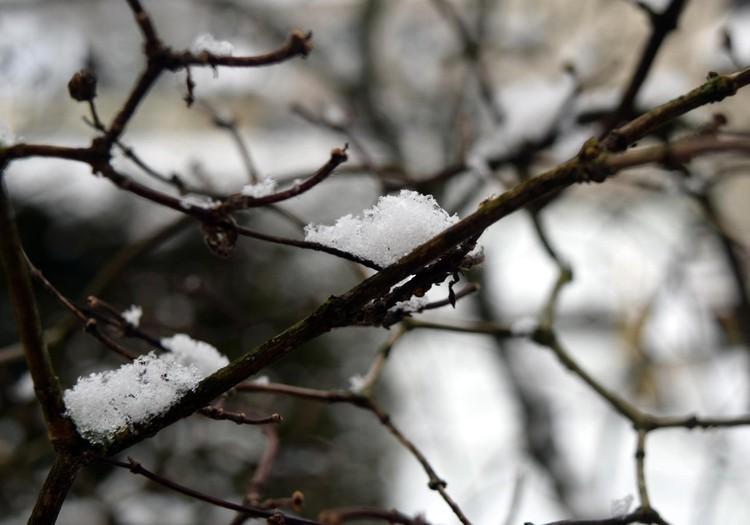 Laikas su metinuku: pirmam sniegui kyštelėjus nosį