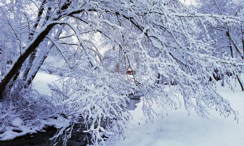 TOKIA MŪSŲ KASDIENYBĖ. Pasaulinė sniego diena