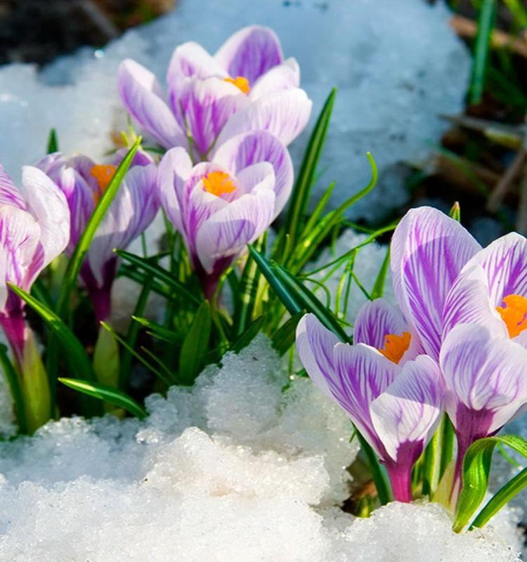 Pavasariškai žaliaskonkursas su aromama.lt
