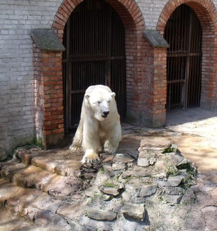 Linksma išvyka į zoologijos sodą
