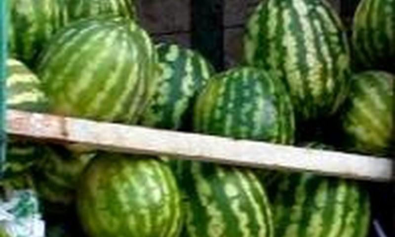 Kodėl besilaukiančioms naudingi arbūzai?